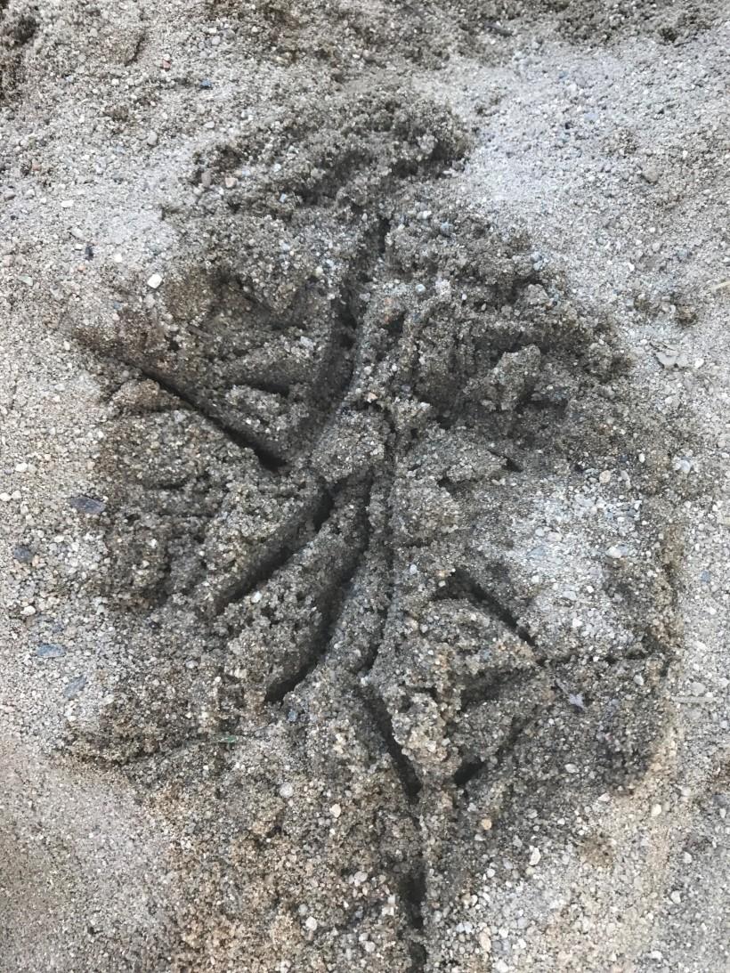 sandstory
